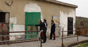 Allevatore di Cesarò arrestato per detenzione abusiva di arma e ricettazione