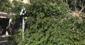 Crolla albero in zona tribunale: De Luca convoca una conferenza di servizi