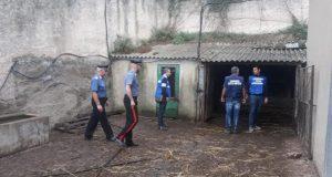 Sicurezza alimentare: controlli dei carabinieri