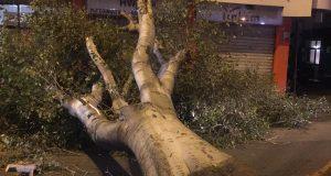 Il forte vento ripropone l'emergenza alberi: interventi dei Vigili del Fuoco
