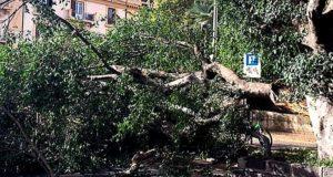 Alberi Messina: messa in sicurezza del verde pubblico