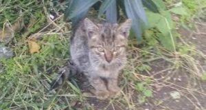Scalinata Ringo: colonia felina presa di mira