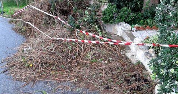 "San Saba, Biancuzzo: ""Alla Madonnina eliminare i rami giacenti in strada"""