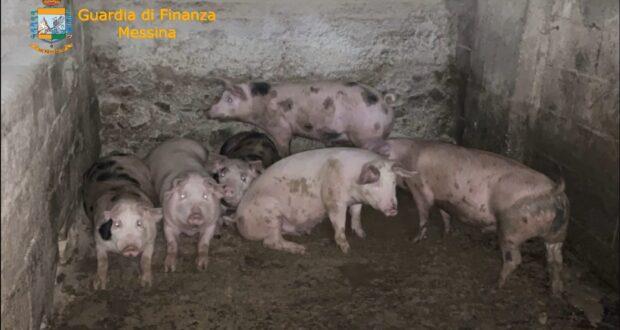 Sequestrata fattoria lager nel taorminese, due denunce (video)