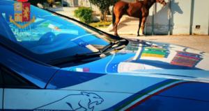 La polizia ferma una corsa clandestina di cavalli a Santa Margherita