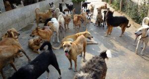 Emergenza randagismo, 10 milioni di euro per ristrutturare o progettare rifugi per cani. Il comune di Messina già al lavoro per partecipare al bando