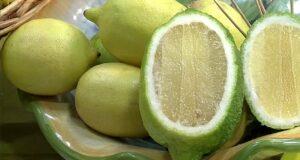 Interdonato di Messina Igp: il limone prescelto dalla Regina Elisabetta